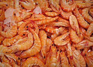 shrimp-1523135_640